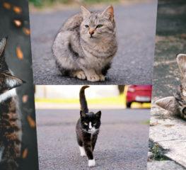 เคล็ดลับง่ายๆ : วิธีถ่ายภาพแมวยอดเยี่ยม ที่หลายคนอาจจะยังไม่รู้!!