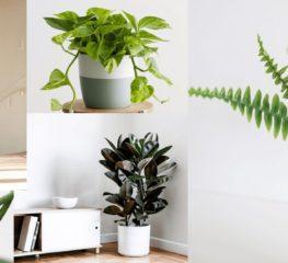 สู้ฝุ่น PM 2.5 ด้วย 10 ต้นไม้ปลูกง่าย ตายยาก ช่วยฟอกอากาศในบ้าน
