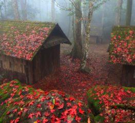 รวม 7 ที่เที่ยวธรรมชาติช่วงปลายฝนต้นหนาว